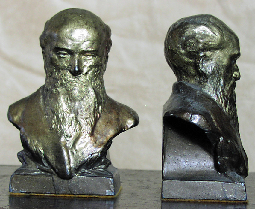 Image for Darwin Bust Bookends